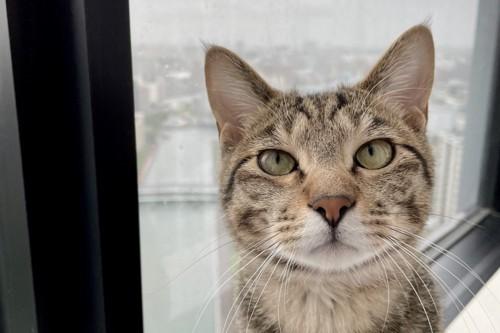 ムッとした表情の猫