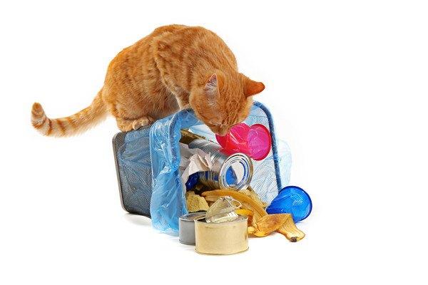 倒れたゴミ箱の臭いを嗅ぐ猫