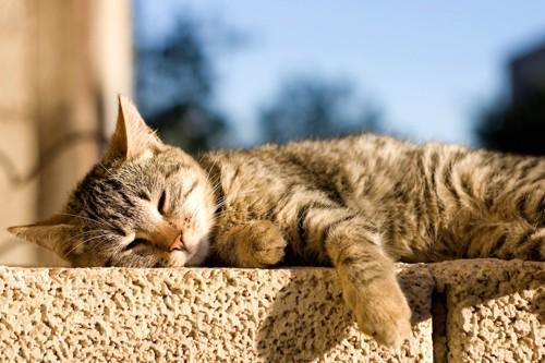 屋外で日なたぼっこする猫