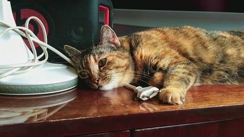 コードをアゴに敷いて横たわる猫
