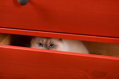 タンスの中からのぞく猫