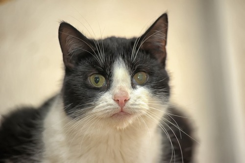 片目が濁っている猫