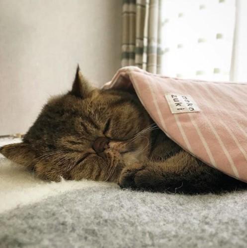 かわいい寝顔4
