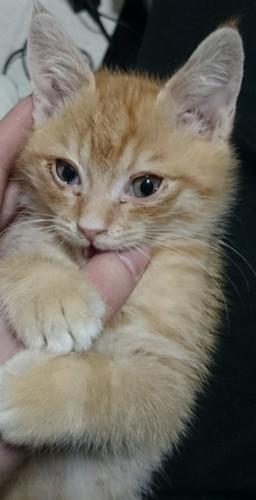子猫のチャロ