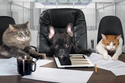 猫二匹と犬一匹が座って会議