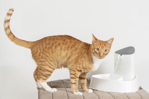 給水器の前にいる猫