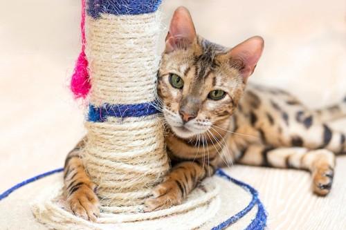 麻紐が巻かれた柱に抱きつく猫