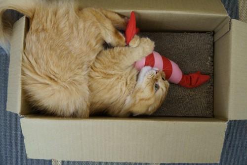 けりぐるみで遊ぶ猫