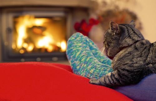 暖炉の前の飼い主の足に乗る猫