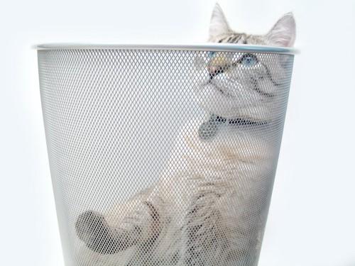 ゴミ箱の中に入っている猫