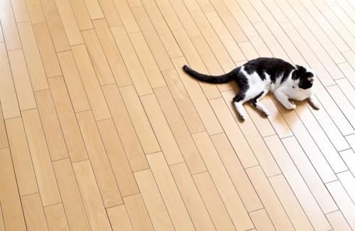フローリングで寝転ぶ猫