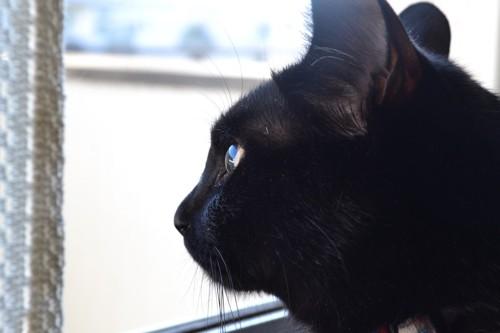 窓の外を眺めるメイ