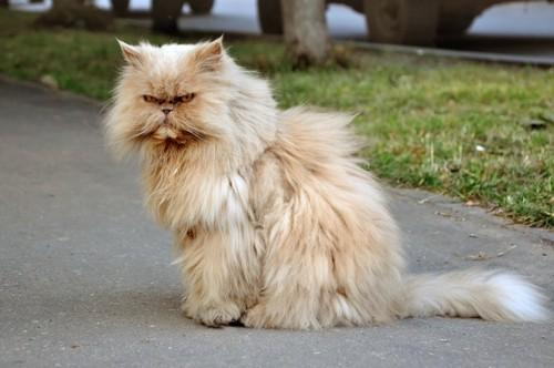 睨みをきかせる猫