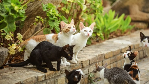 日向ぼっこする大量の猫
