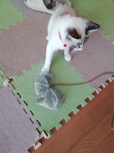 愛猫とおもちゃ