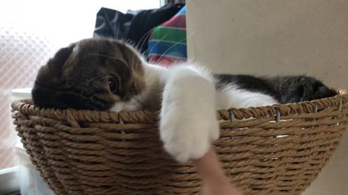 顔を半分だしてパンチする猫