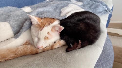 2匹が寝てる写真