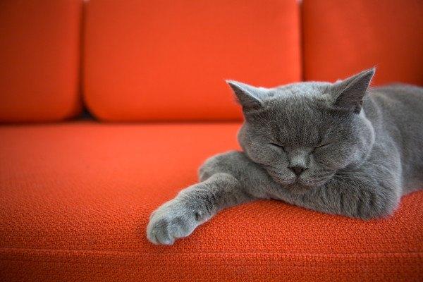 赤いソファで寝る猫