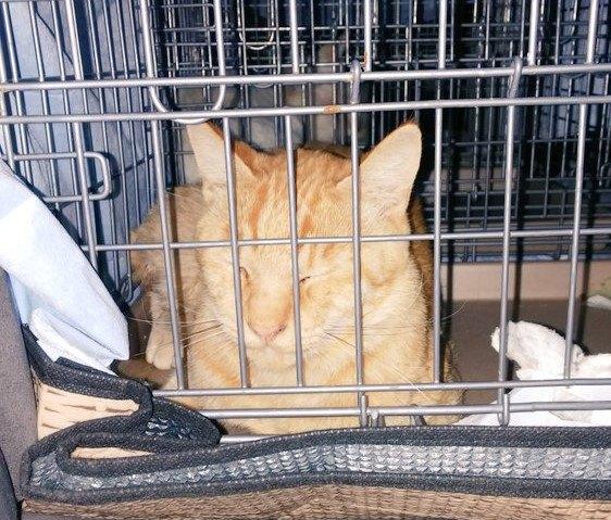 飼い主に返される猫2