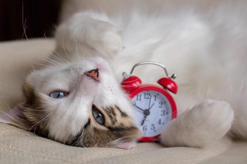 ベッドで時計を抱えて寝る猫