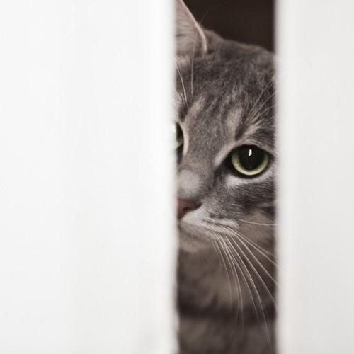隙間から見る猫