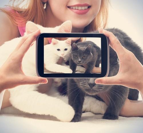 二匹の猫を写真に収める