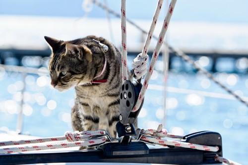 ヨットにのる猫
