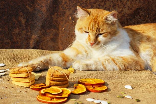 クッキーの後ろで寝ている猫
