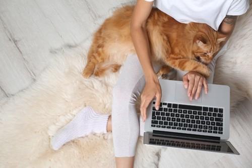 座ってパソコンを使う人に乗る茶猫