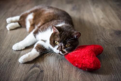 ハートのクッションと横になっている猫