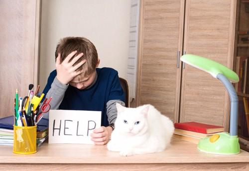 困る子供に寄り添う猫