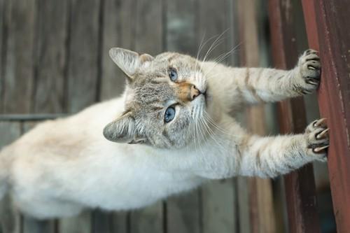 柱で爪を研ぐ猫