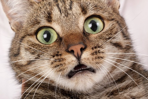 歪む猫の顔