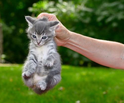 首を掴まれた猫