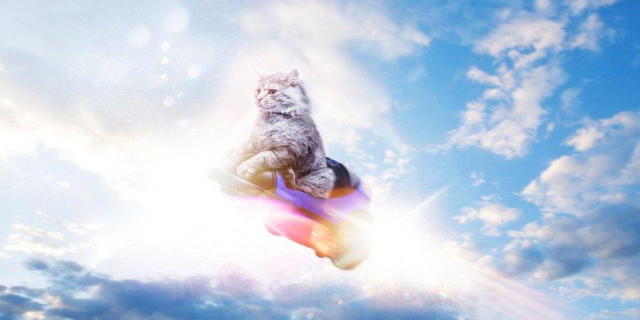 不思議な空を飛ぶ猫