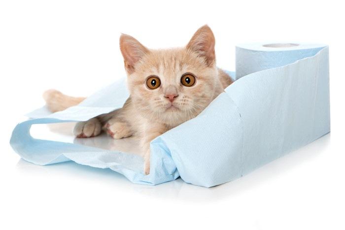 トイレットペーパーにくるまる猫