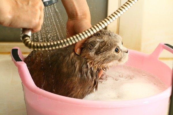 シャワーとピンクの入れ物に入った猫