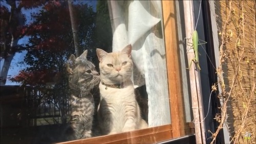 外のカマキリを眺める