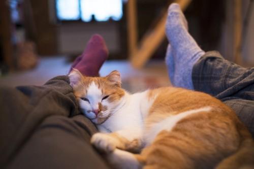 足の上で眠る猫
