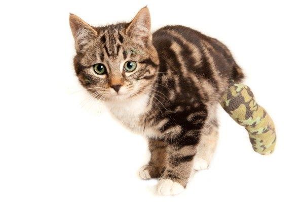 左後肢を怪我している猫