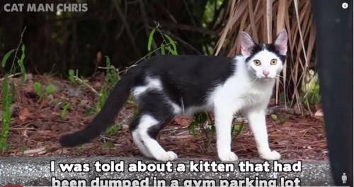 縁石に黒白猫