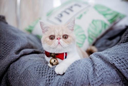 鈴の付いた首輪をつける猫