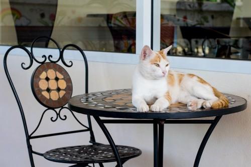 カフェテーブルの上の猫