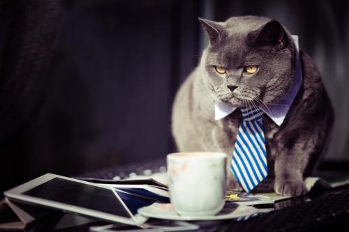 オフィスウエアの猫