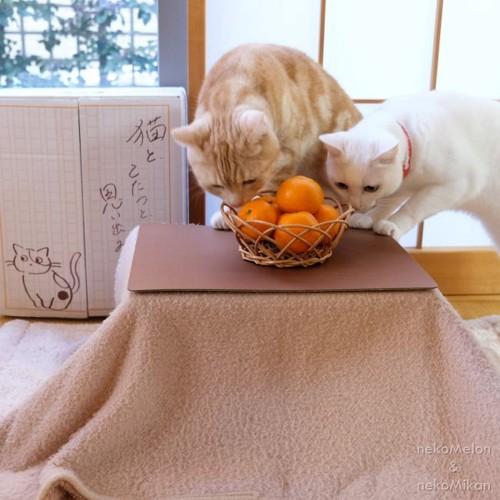 猫と、こたつと、思い出みかんイメージ3