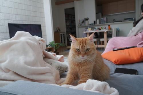 ソファの上でフミフミする猫