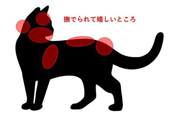 猫を撫でると喜ぶ場所の図