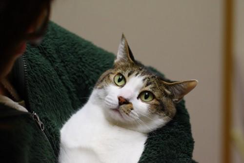 抱っこする人の顔を見る猫