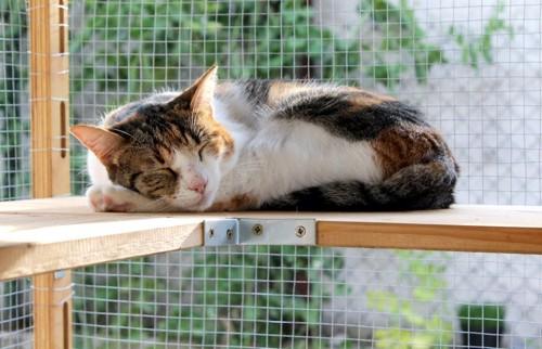 ケージの台の上で眠る猫