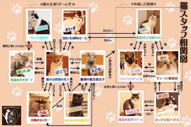 猫スタッフたち